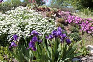 Минск. Ботанический сад